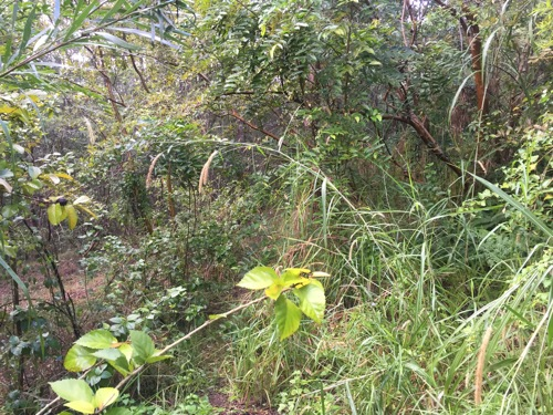 Here's another overgrown section that needs some serious attention...