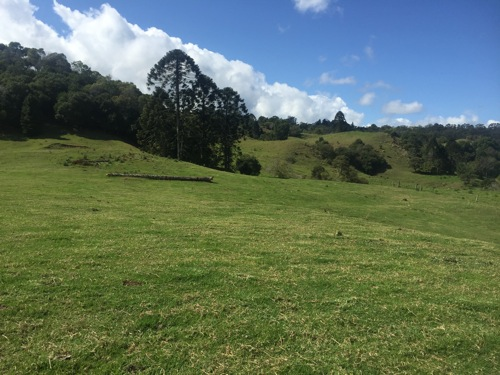 Acreage mowing North Maleny