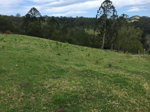 Rough terrain mowing services Maleny