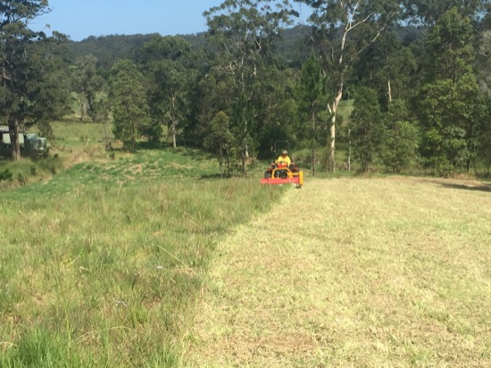 flail mowing palmwoods
