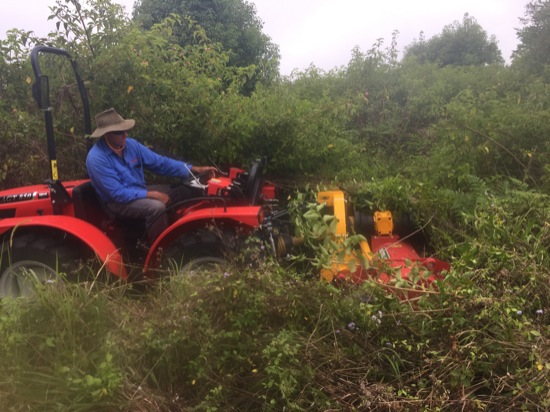 Lantana eradication