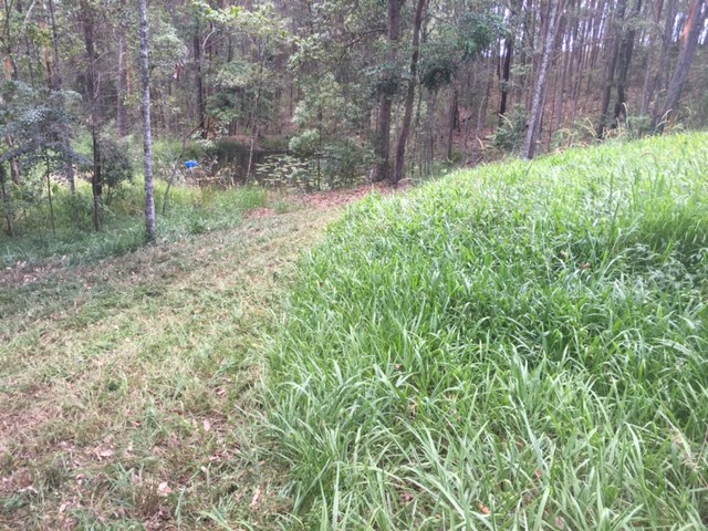 This grass was really thick and heavy. Most mowers would die in here
