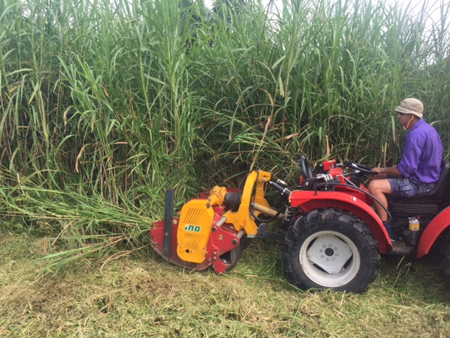 elephant grass removal