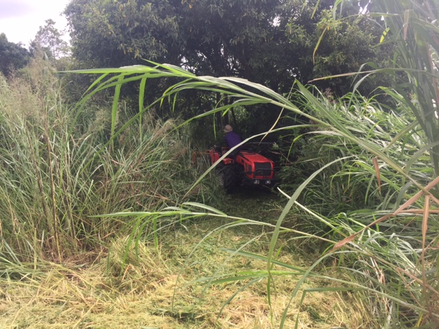 elephant grass mowing